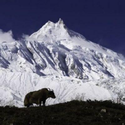 Logo de l'Expé Tour du Manaslu (Nepal)